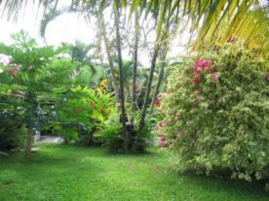 Appartement jardin de christophe colomb capesterre belle for Jardin tropical guadeloupe
