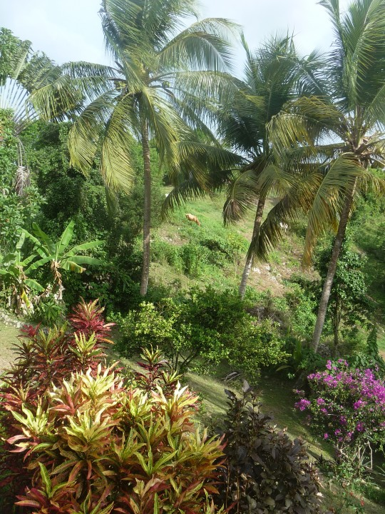 Appartement les hesp rides gosier guadeloupe campagne for Appartements le jardin