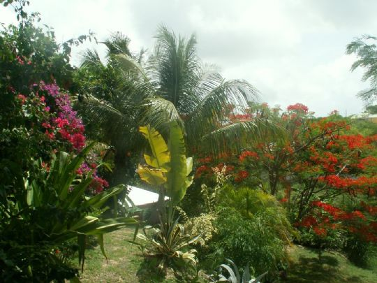 Bungalow 1529 saint fran ois guadeloupe for Jardin tropical guadeloupe