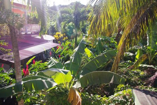 G te les corallines deshaies guadeloupe for Jardin tropical guadeloupe