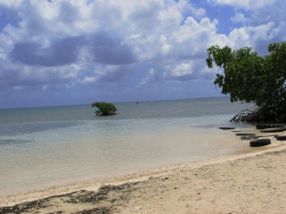 Photos vacances Antilles - Photo plage march� cocotier