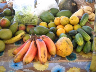 Photos Dominique