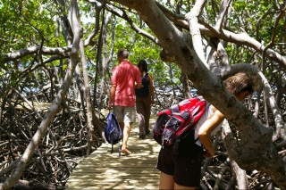 Photo : Mangrove de la Caravelle