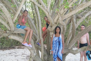 Photos vacances Guadeloupe - Photo plage march� cocotier
