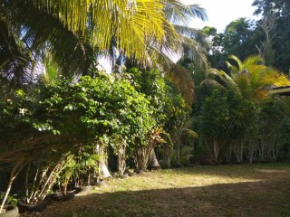 Location Appartement Guadeloupe - la pelouse