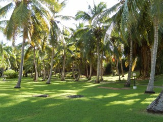 Location Appartement Guadeloupe - Vue jardin