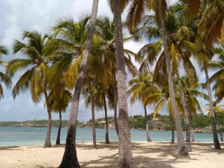 Location Appartement Guadeloupe - Plage Club Med - 1,6 km