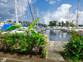 Marina de la Pointe-du-Bout Martinique