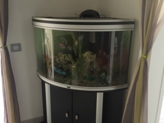 Location Appartement standing Guadeloupe - (F4) Aquarium