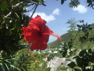 Location Appartement standing Saint-Martin - Hibiscus