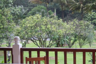 Location Bungalow Guadeloupe - vue terrasse