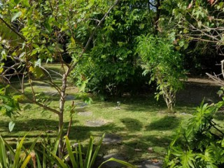 Jardin tropical : Bungalow Guadeloupe