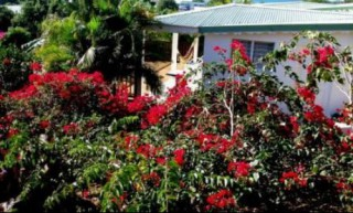 Location Bungalow Guadeloupe - bungalow  fleuri