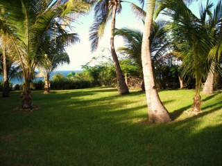 Location Villa Guadeloupe - jardin tropical